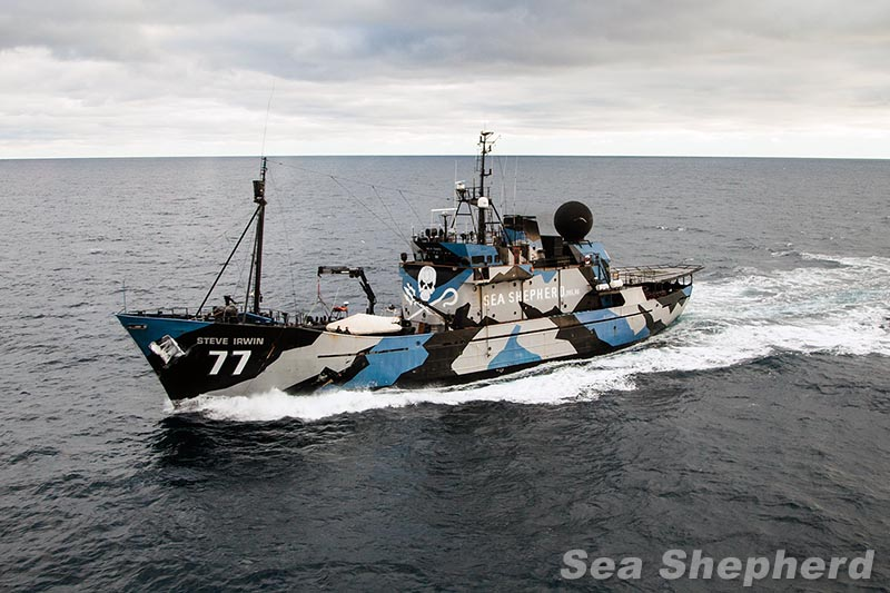 sea shepherd uk sea shepherd locates whale poaching fleet prepares for interception. Black Bedroom Furniture Sets. Home Design Ideas